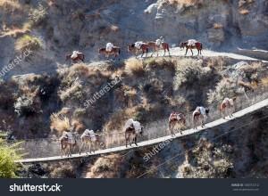 stock-photo-a-mule-caravan-crossing-suspension-bridge-over-thuli-bheri-nadi-river-tripurakot-dolpa-district-180747212